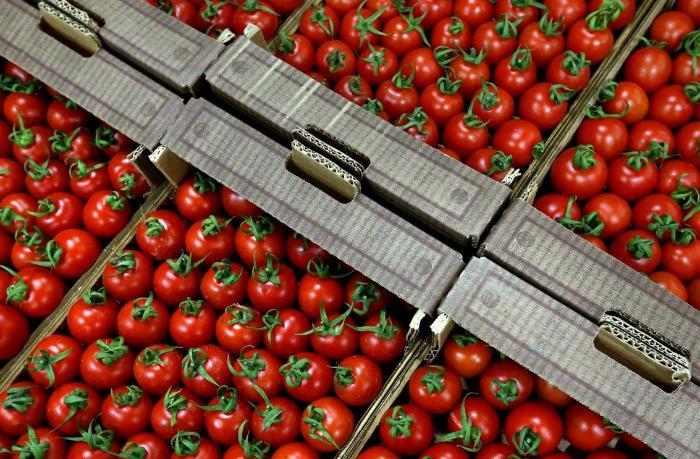 Qadağalara baxmayaraq Azərbaycan Rusiyaya pomidor ixracını artırıb