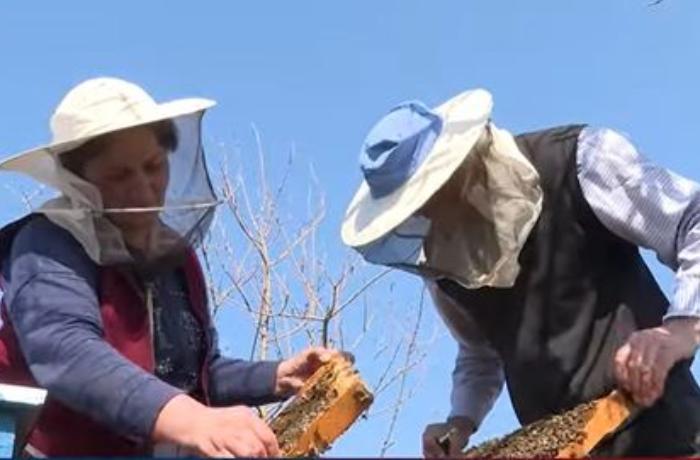 Laçınlılar doğma torpaqlarda arıçılığı inkişaf etdirəcəklər — VİDEO