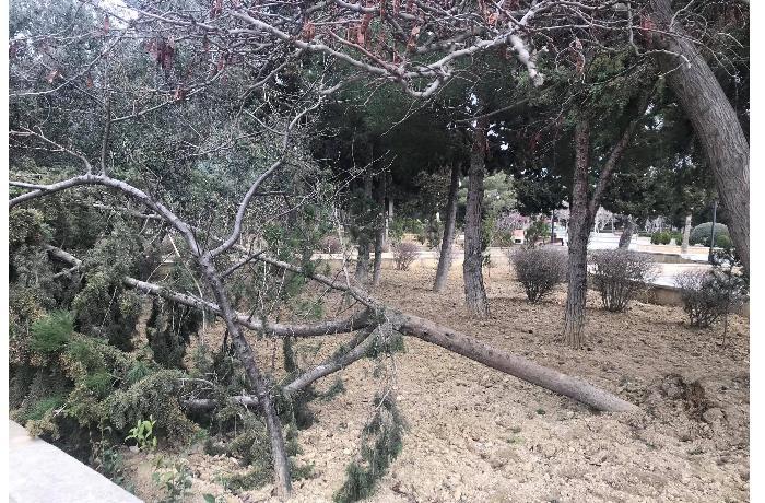 Heydər Əliyev parkındakı ağaclar məhv olur — Bəs İcra Hakimiyyəti hara baxır? (VİDEO+FOTO)