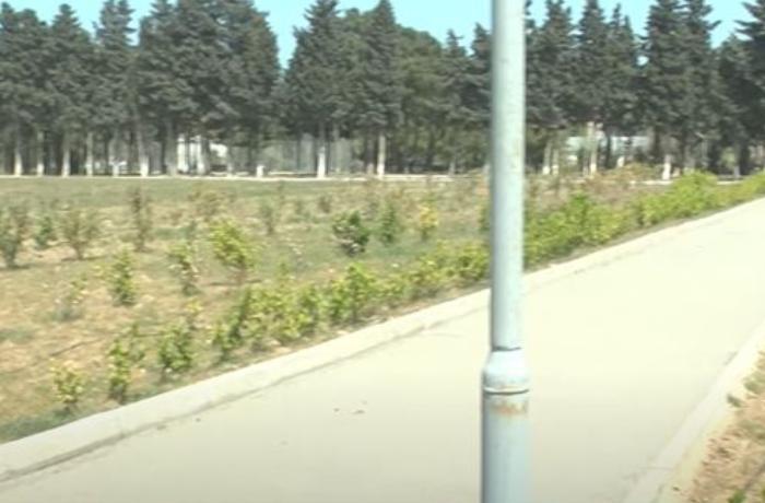 Böyük futbola ehtiyac olmayanda: Sumqayıtda stadionun ortasından yol çəkildi — VİDEO