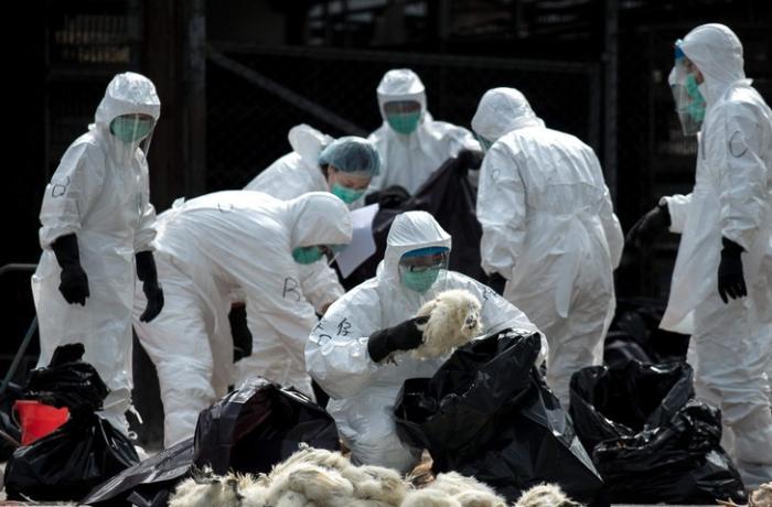 Çində quş qripi qeydə alındı, ölən var