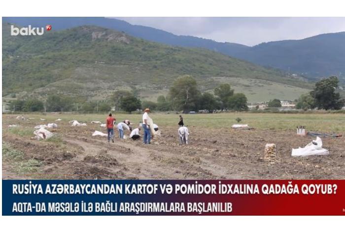 Rusiya Azərbaycandan kartof və pomidor idxalına qadağa qoyub? — VİDEO