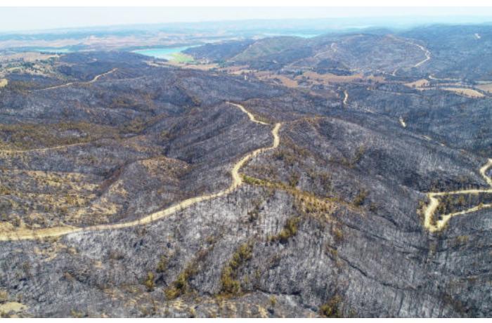 Türkiyədə yanan meşələrin dronla çəkilişi — VİDEO