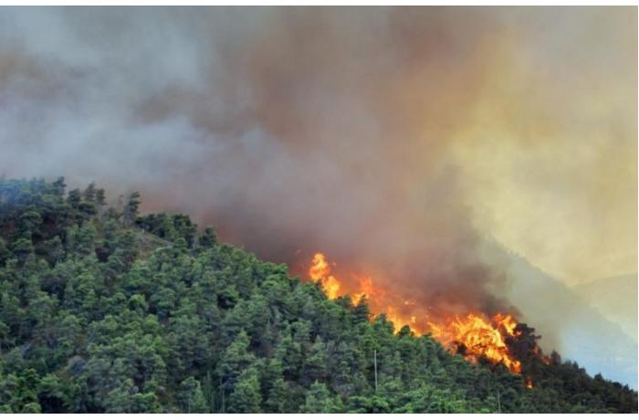 Lənkəranda meşə yanğınının söndürülməsinə helikopter cəlb olunub — YENİLƏNİB