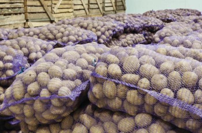 İrandan gətirilən tonlarla kartof Azərbaycana buraxılmadı